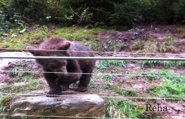 Besuch im alternativen Wolf- und Bärenpark in Schapbach