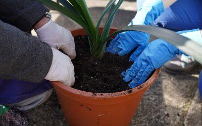 Pflanzenumtopf-Aktion der Werkstatt Offenburg